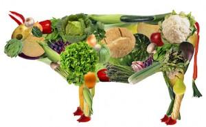 veg cow